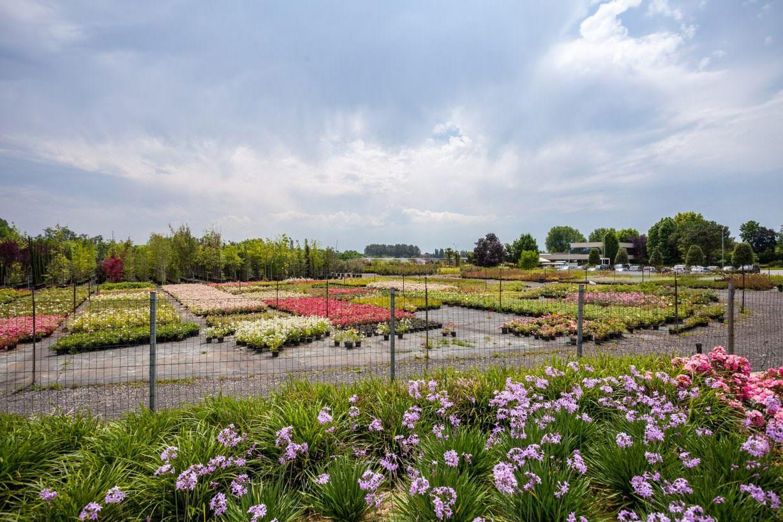Manutenzione Giardini Milano E Provincia company profile: progettazione giardini piscine e laghetti